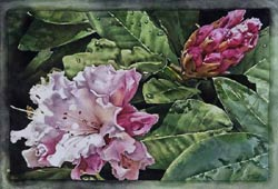 After Summer Showers, Rhododendron by Kirsten Sheffield