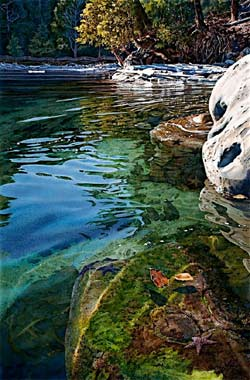 Intertidal Realm by Carol Evans